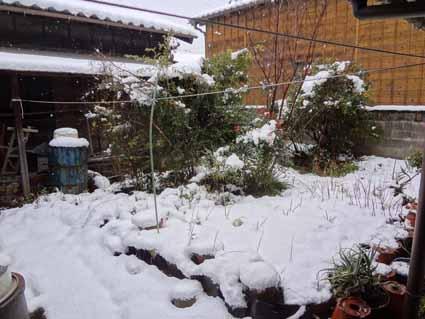 0.12月18日大雪でした。15cm?.jpg