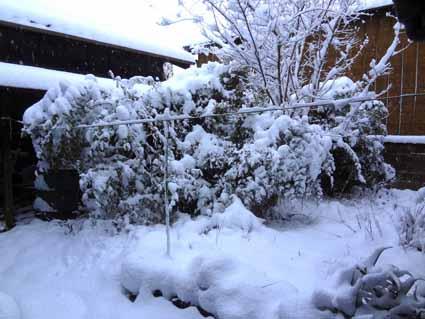 1.我が家の庭は真っ白.jpg
