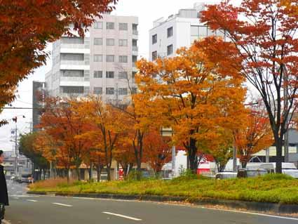 12東口駅前通りの紅葉(ケヤキ等)R1083455 (1).jpg