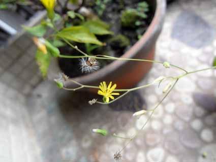 2.我が家の庭にかれんな花が.jpg