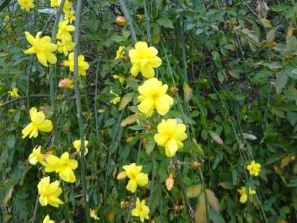 3.黄色がきれいな花が咲いていました.jpg