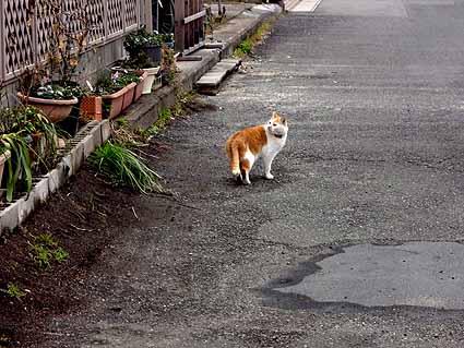 6.家猫のようです.jpg