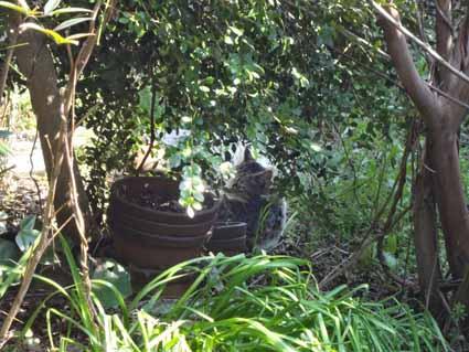 8.庭に猫が日向ぼっこ.jpg