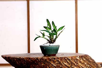 ↓釉薬鉢.jpg