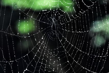 クモの巣1575.jpg