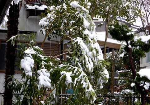 愛知県岡崎市の雪IU.jpg