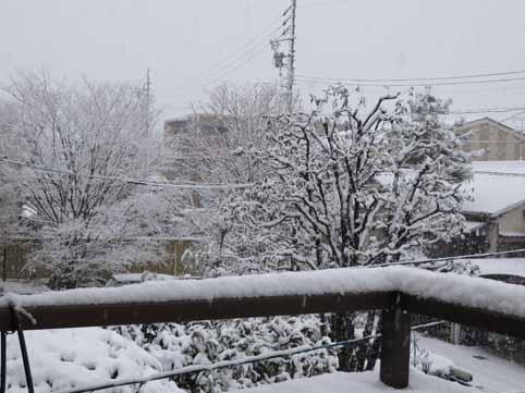 愛知県日進市の雪IA.jpg