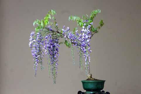 盆栽1.jpg