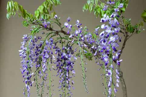 盆栽2.jpg