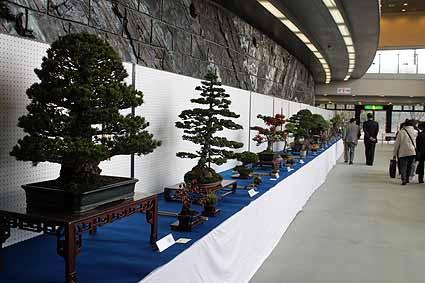 2、盆栽展_7973.jpg