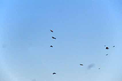 2、飛んでいるのは別の鳥でしょうか0913.jpg