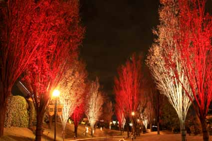 IMG_6182木のライトアップ.jpg
