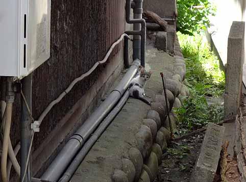 8.7.12家の裏に白い子猫が.jpg